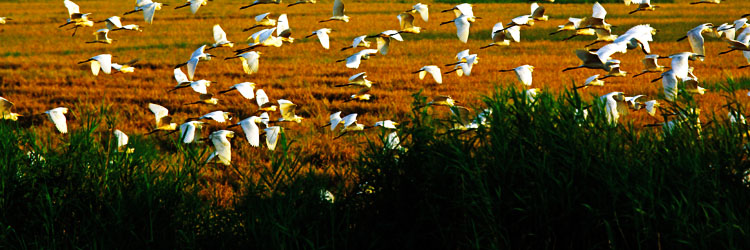 Birding in Kumarakom Marvel Tours Packages